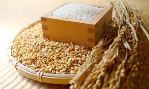 稲とお米の画像
